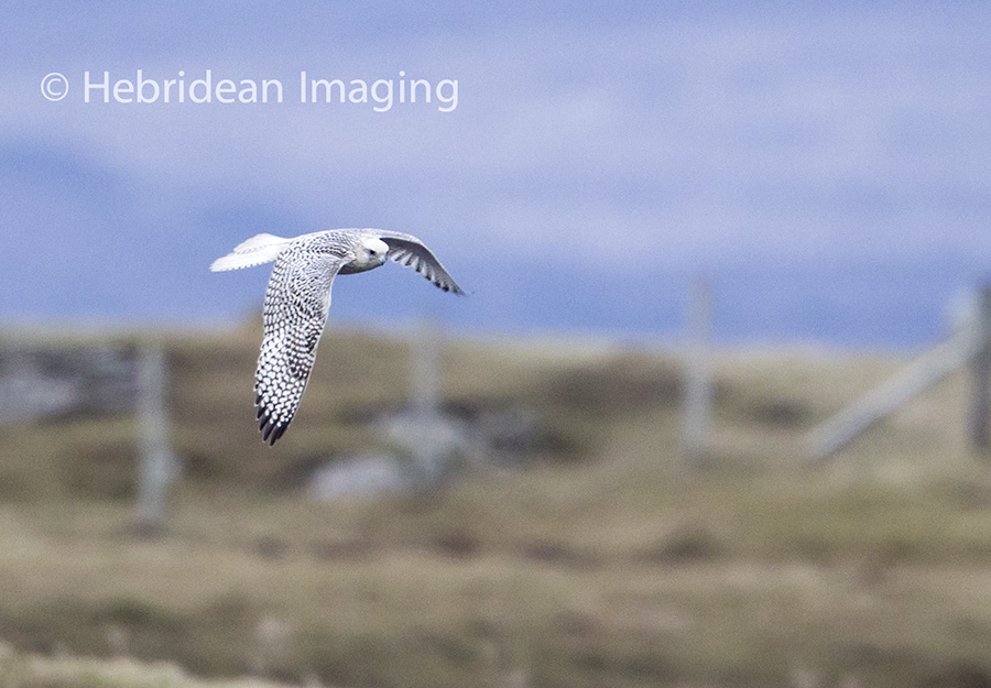 Hebridean Imaging - Outer Hebrides Photography